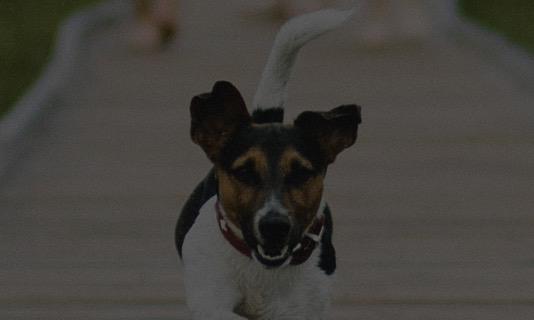 blog-callout-copy-1 Animal Emergency & Referral Associates