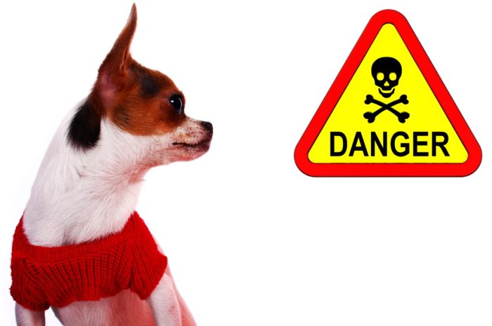 2-e1501684518281 How to Prevent an Animal Poison-Related Emergency