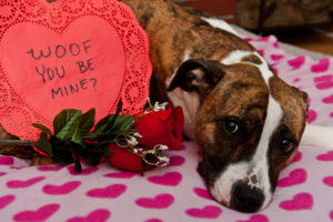 valentines-day-pet-safety-300x200 Valentine's Day: Staying Clear of These 5 Pet Hazards