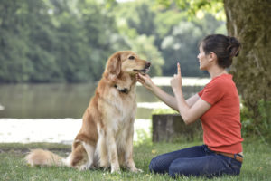 communication-300x200 How to Communicate with Your Dog