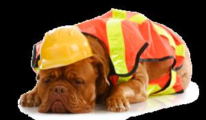 dog2-300x175 Animal Emergency & Referral Associates