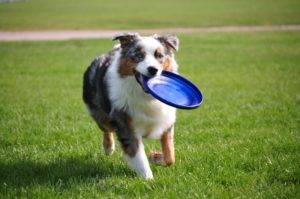 AERA-exercise-for-pets-300x199 5 Ways to Get Active With Your Dog This Spring