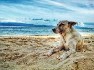 AERA Protecting dogs from heatstroke