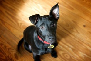 Tips for Preparing Your Pet for Your Return to Work